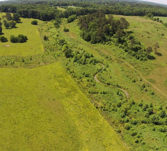 Scaly Bark Creek Mitigation Project