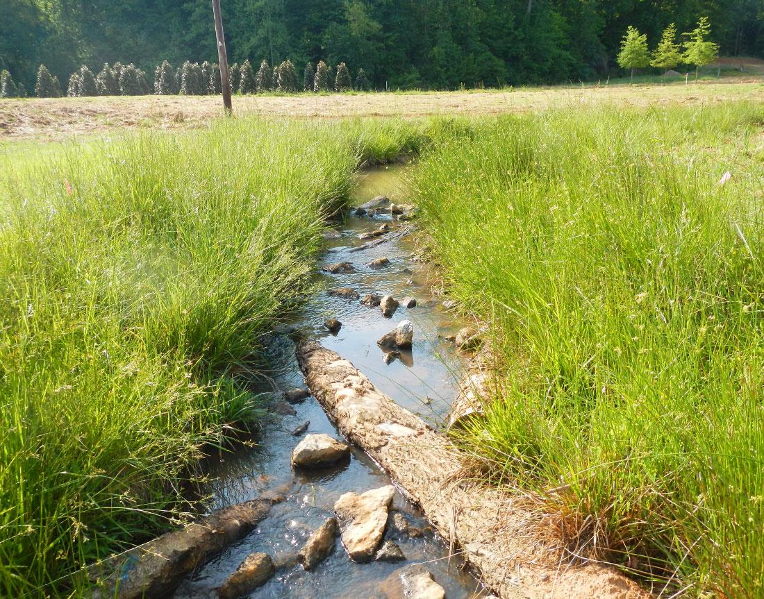 Lyle Creek Mitigation Project