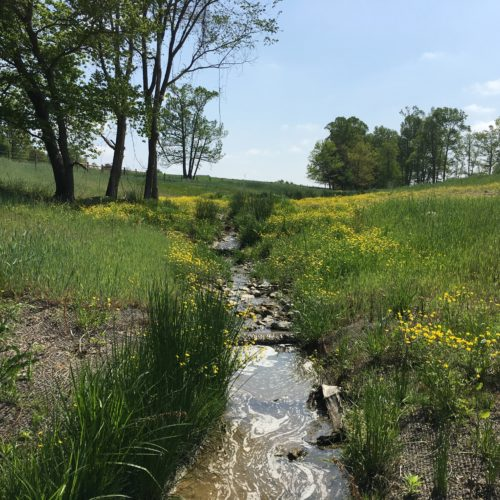 NC stream mitigation, NC stream restoration