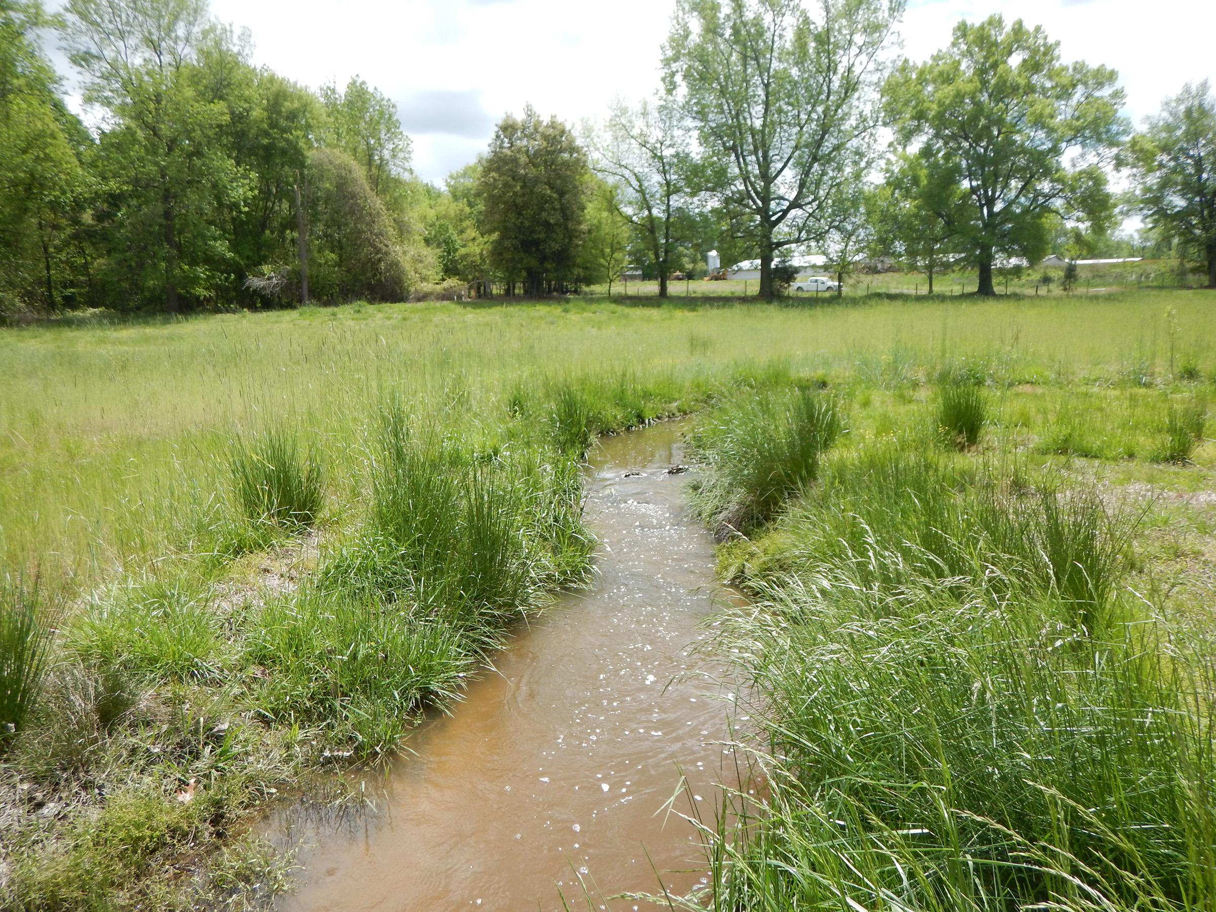Falling Creek Mitigation Site