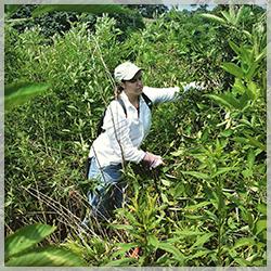 Professional Wetland Scientist, ALea Tuttle
